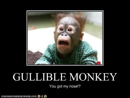 GULLIBLE MONKEY - Cheezburger - Funny Memes | Funny Pictures